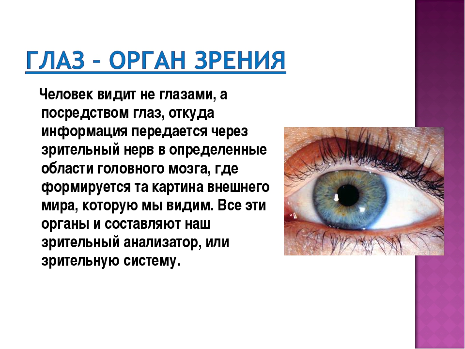Человек видит не глазами, а посредством глаз, откуда информация передается ч...