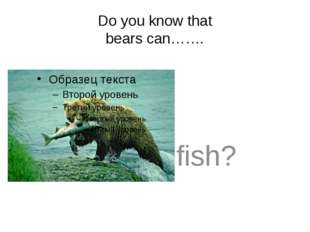 Do you know that bears can……. 	fish?