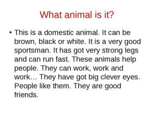 What animal is it? This is a domestic animal. It can be brown, black or white