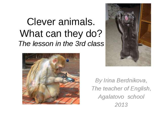 Clever animals. What can they do? The lesson in the 3rd class By Irina Berdni...