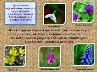 «Посмотри на нежный весенний цветок – он вырос не для того, чтобы ты сорвал е