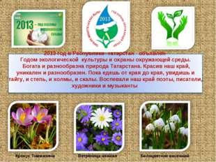 Ветреница нежная Крокус Томмазини Белоцветник весенний