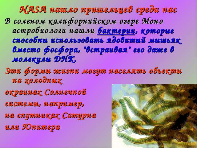 NASA нашло пришельцев среди нас В соленом калифорнийском озере Моно астробиол...
