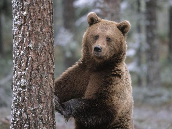 медведь).jpg