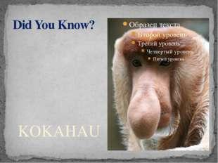 Did You Know? KOKAHAU