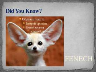 Did You Know? FENECH