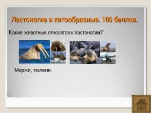 Ластоногие и китообразные. 100 баллов. Какие животные относятся к ластоногим?