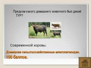 Домашние сельскохозяйственные млекопитающие. 100 баллов. Предком какого домаш