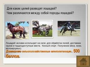 Домашние сельскохозяйственные млекопитающие. 500 баллов. Для каких целей разв