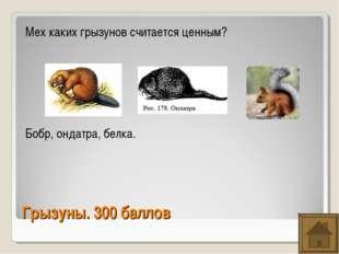Грызуны. 300 баллов Мех каких грызунов считается ценным? Бобр, ондатра, белка.