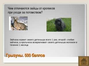 Грызуны. 500 баллов Чем отличаются зайцы от кроликов при уходе за потомством?