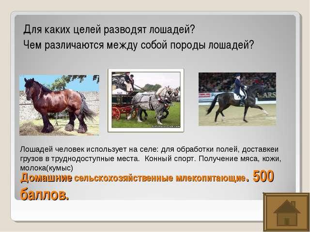 Домашние сельскохозяйственные млекопитающие. 500 баллов. Для каких целей разв...
