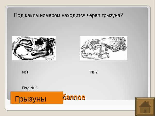 Насекомые. 200 баллов Под каким номером находится череп грызуна? №1 № 2 Под №...