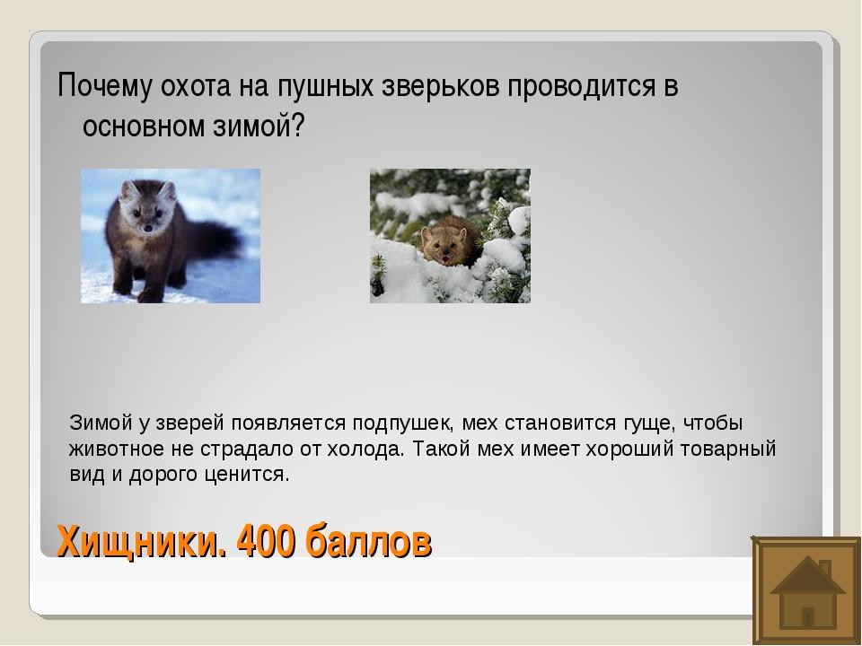 Хищники. 400 баллов Почему охота на пушных зверьков проводится в основном зим...