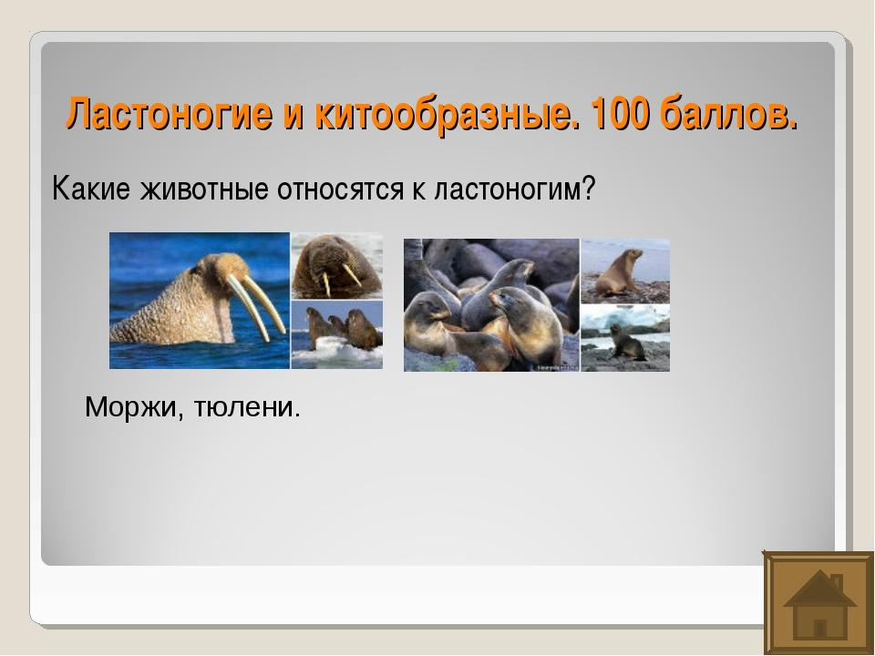 Ластоногие и китообразные. 100 баллов. Какие животные относятся к ластоногим?...