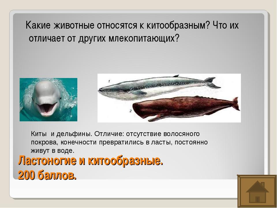 Ластоногие и китообразные. 200 баллов. Какие животные относятся к китообразны...