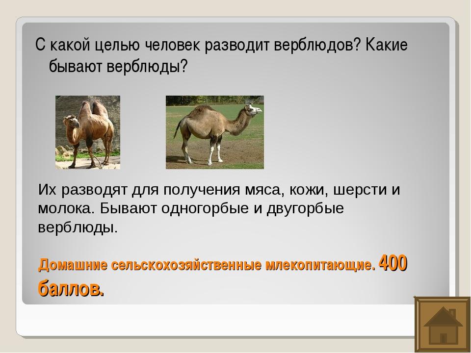 Домашние сельскохозяйственные млекопитающие. 400 баллов. С какой целью челове...