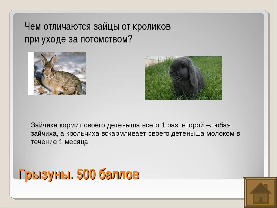 Грызуны. 500 баллов Чем отличаются зайцы от кроликов при уходе за потомством?...