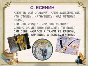 С. ЕСЕНИН КЛЕН ТЫ МОЙ ОПАВШИЙ, КЛЕН ЗАЛЕДЕНЕЛЫЙ, ЧТО СТОИШЬ, НАГНУВШИСЬ, НАД