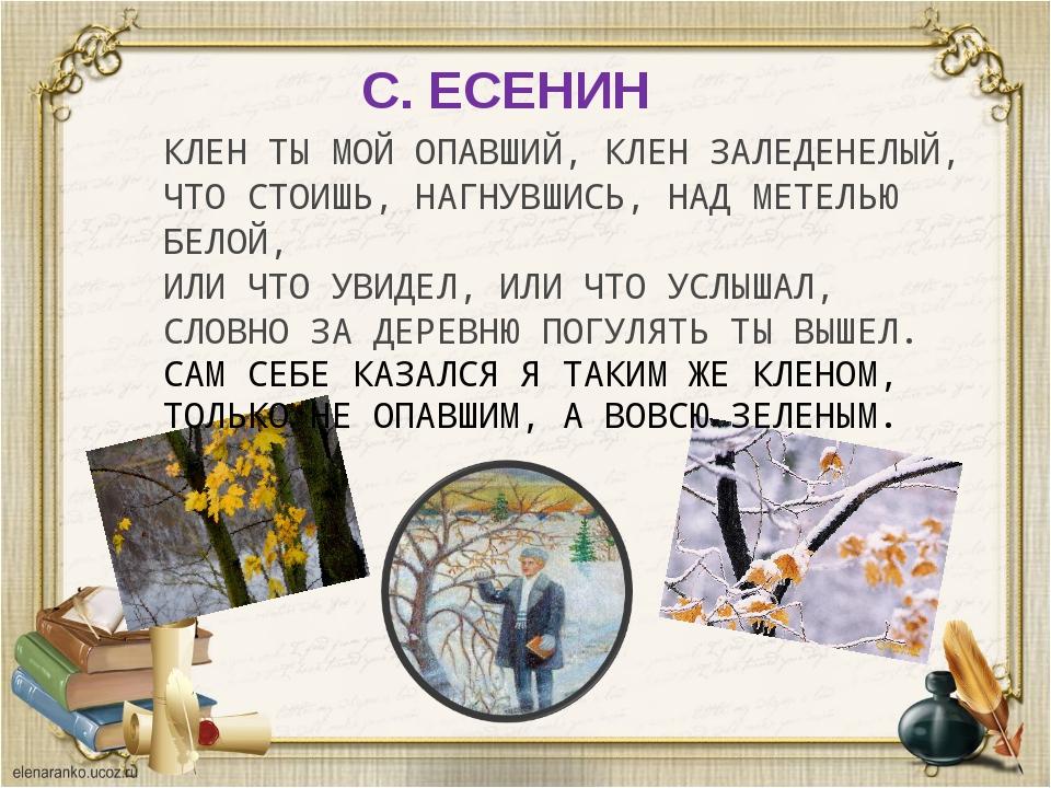С. ЕСЕНИН КЛЕН ТЫ МОЙ ОПАВШИЙ, КЛЕН ЗАЛЕДЕНЕЛЫЙ, ЧТО СТОИШЬ, НАГНУВШИСЬ, НАД...