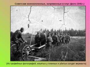 Советские военнопленные, запряженные в плуг (фото 1941г.) (Из трофейных фотог