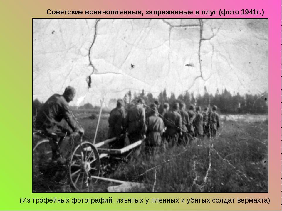 Советские военнопленные, запряженные в плуг (фото 1941г.) (Из трофейных фотог...
