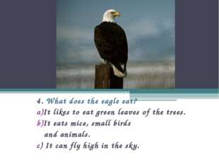 4. What does the eagle eat? It likes to eat green leaves of the trees. It eat