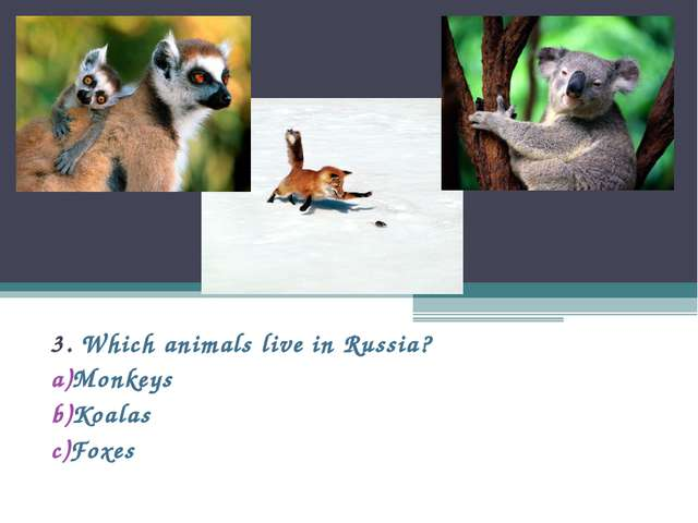 3. Which animals live in Russia? Monkeys Koalas Foxes