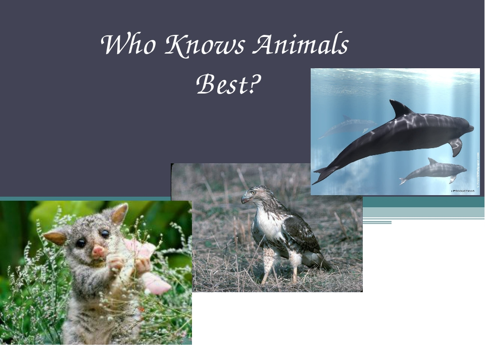 Who Knows Animals Best?