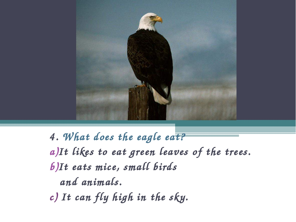4. What does the eagle eat? It likes to eat green leaves of the trees. It eat...