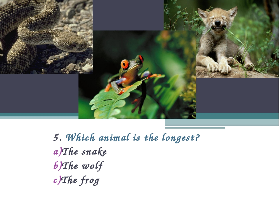 5. Which animal is the longest? The snake The wolf The frog