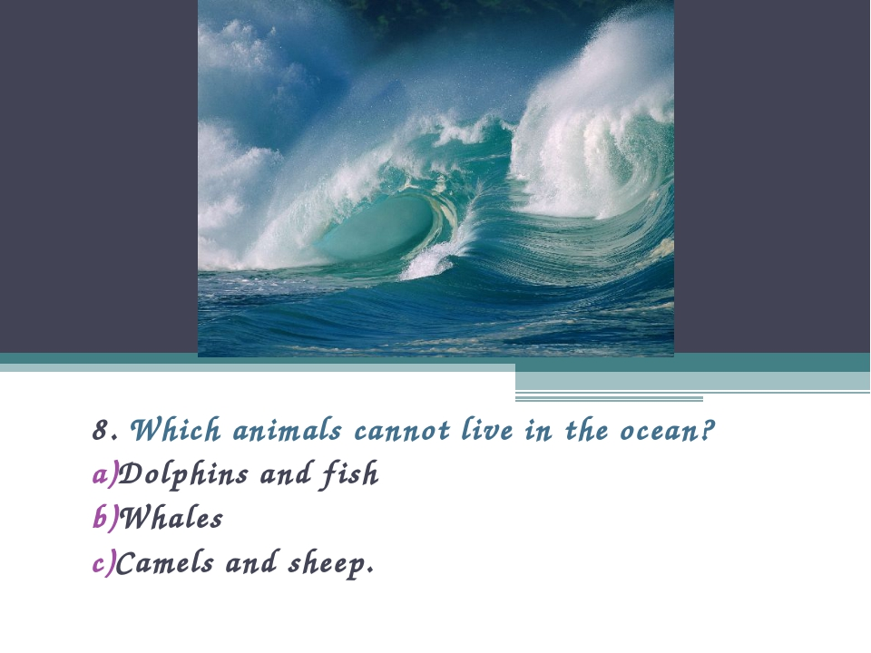 8. Which animals cannot live in the ocean? Dolphins and fish Whales Camels an...