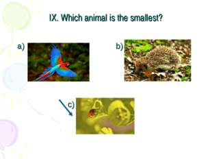 IX. Which animal is the smallest? a) b) c)