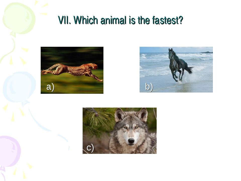 VII. Which animal is the fastest? a) b) c)