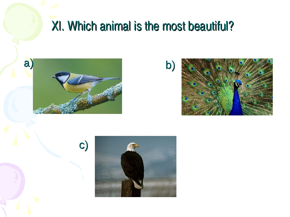 XI. Which animal is the most beautiful? a) b) c)