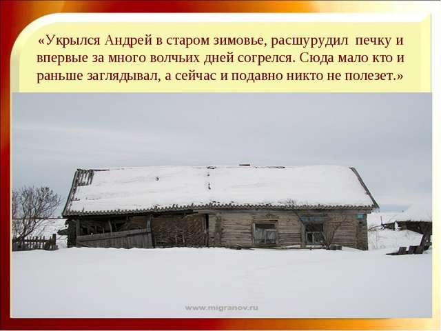 «Укрылся Андрей в старом зимовье, расшурудил печку и впервые за много волчьих...