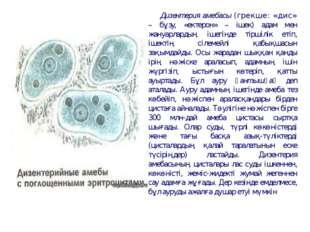 Дизентерия амебасы (грекше: «дис» – бұзу, «ектерон» – ішек) адам мен жануарла