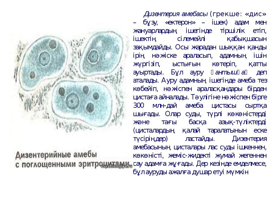 Дизентерия амебасы (грекше: «дис» – бұзу, «ектерон» – ішек) адам мен жануарла...