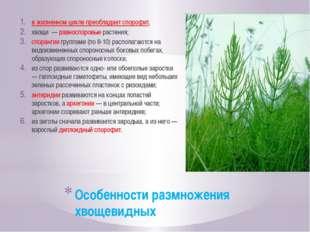Особенности размножения хвощевидных в жизненном цикле преобладает спорофит, х