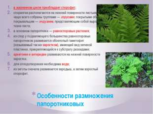 Особенности размножения папоротниковых в жизненном цикле преобладает спорофит