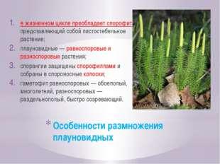 Особенности размножения плауновидных в жизненном цикле преобладает спорофит,