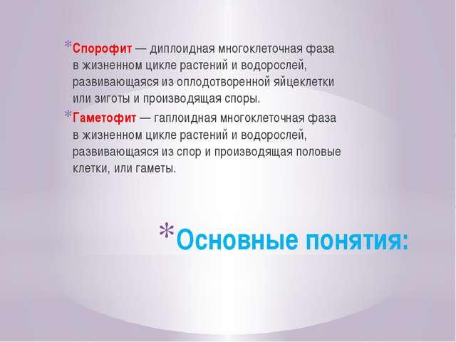 Основные понятия: Спорофит—диплоидная многоклеточная фаза вжизненном цикле...