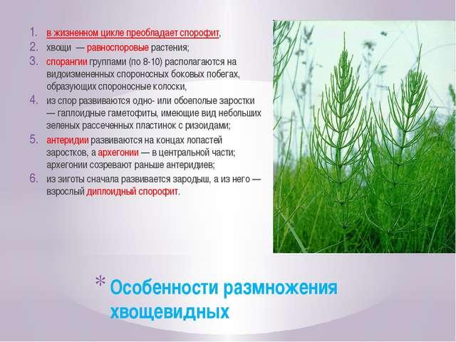 Особенности размножения хвощевидных в жизненном цикле преобладает спорофит, х...