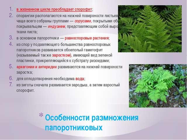Особенности размножения папоротниковых в жизненном цикле преобладает спорофит...
