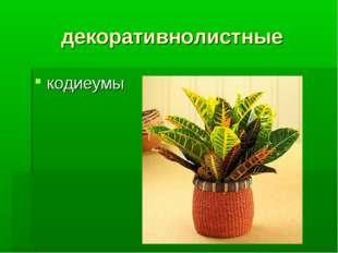 декоративнолистные кодиеумы