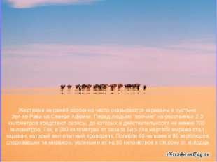 Жертвами миражей особенно часто оказываются караваны в пустыне Эрг-эр-Рави на