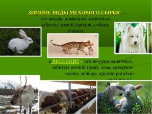ЗИМНИЕ ВИДЫ МЕХОВОГО СЫРЬЯ – это шкуры домашних животных, забитых зимой (крол