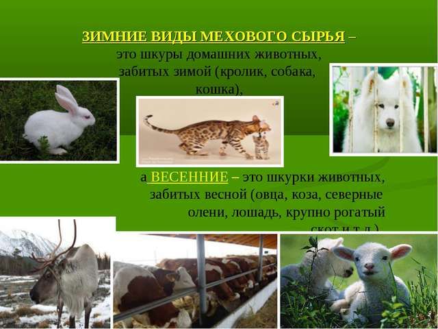 ЗИМНИЕ ВИДЫ МЕХОВОГО СЫРЬЯ – это шкуры домашних животных, забитых зимой (крол...
