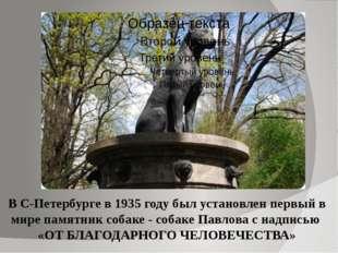 В С-Петербурге в 1935 году был установлен первый в мире памятник собаке - соб
