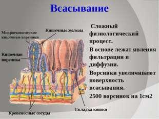 Всасывание Сложный физиологический процесс. В основе лежат явления фильтрации